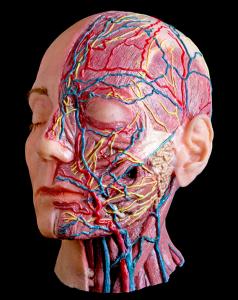 dermatologista harmonizacao facial sao paulo